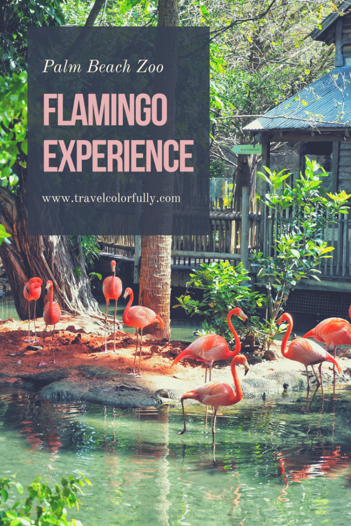 Head To The Palm Beach Zoo In South Florida To Hang out With Flamingos!